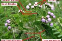 Mengenal Struktur Bunga Majemuk Secara Lengkap