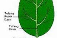 Daun – Penjelasan Upih Daun, Tangkai daun dan Helaian daun Terlengkap