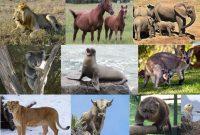 Mengenal Kelas Mammalia beserta Klasifikasinya