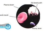 Penjelasan Plasma Darah Terlengkap
