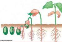 proses-pertumbuhan-dan-perkembangan
