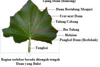 bagian-bagian-daun