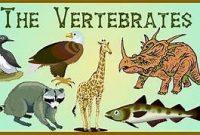Ciri-Ciri Umum serta Klasifikasi Subfilum Vertebrata Terlengkap
