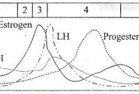 Macam-Macam Hormon Kelamin Laki-Laki dan Wanita
