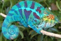 Pengertian-Reptil-Hewan-Berdarah-Dingin,-Ciri,-Klasifikasi,-Struktur-dan-Sistem
